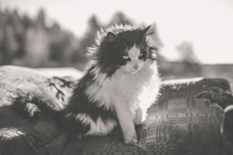 Rural black and white cat. Monochrome old style photo royalty free stock images