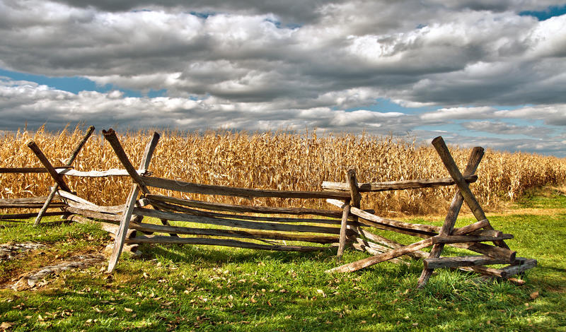 Download Rural Cornfield in autumn stock image. Image of cornfield - 28114473