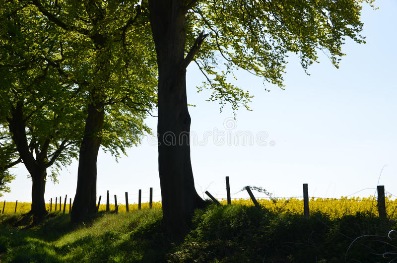 Rural countryside view royalty free stock image