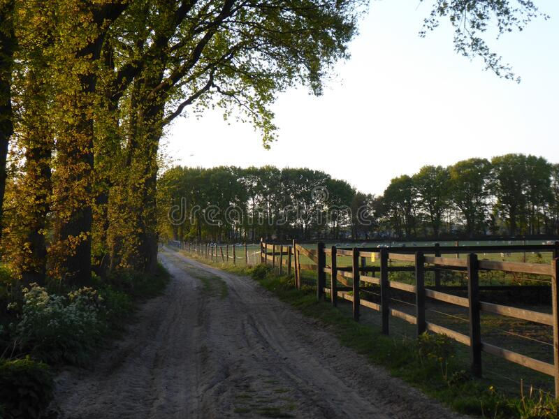 A rural dirt road in ede the netherlands in the sunset. On both sides are fields and forests. A rural dirt road in ede the netherlands in the sunset royalty free stock images