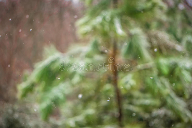 Rural evergreens covered in light snow royalty free stock photos