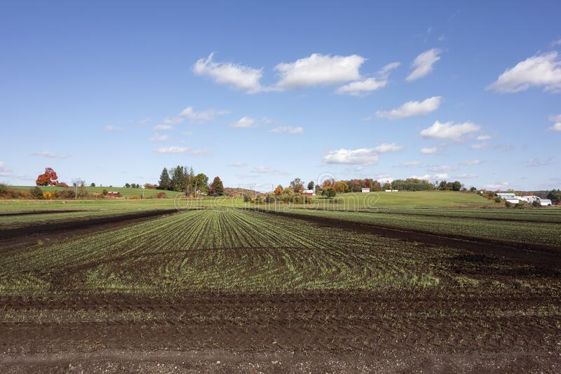 Rural Farm In Autumn royalty free stock images