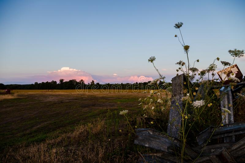 A rural farm field with wildflowers in the foreground and sunset clouds in the distance. A rural farm field with wildflowers in the foreground and sunset clouds royalty free stock photos