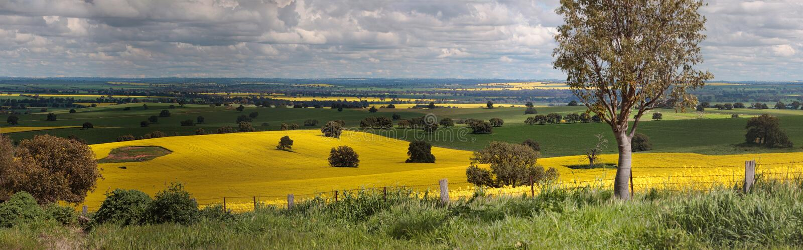 Rural farmlands panorama. Miles and miles of countryside views.... Rural panorama of farmlands across Bumbaldry and Greenthorpe in Central West NSW royalty free stock photography