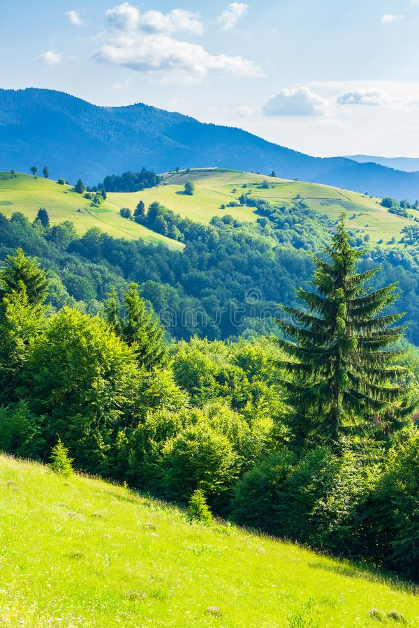 Rural field on forested rolling hills in summer stock photos