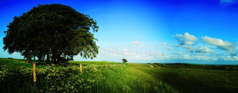 Rural field scene in Wiltshre. A rural country scene in wiltshire uk stock images