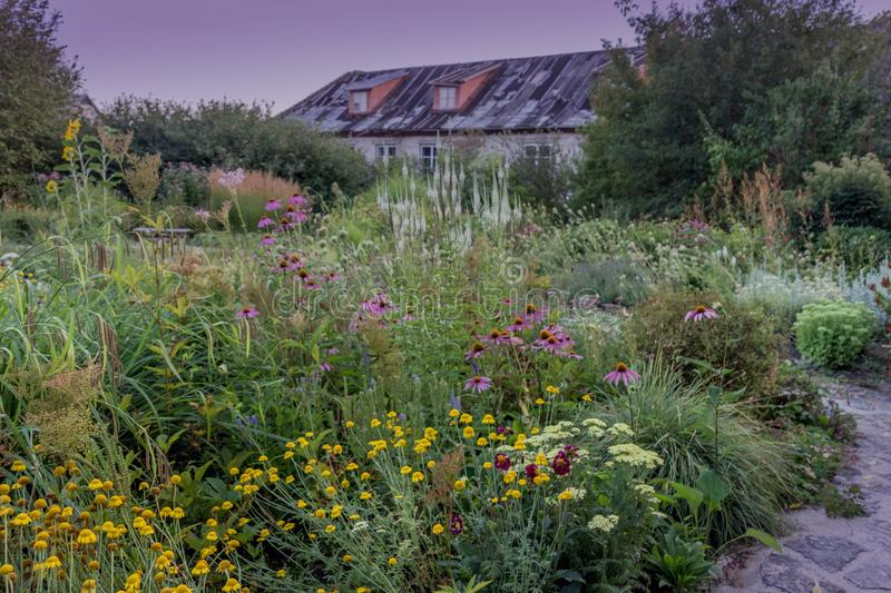 Various flowers in the garden. Rural garden of wildflowers, old farm house on the background royalty free stock photo