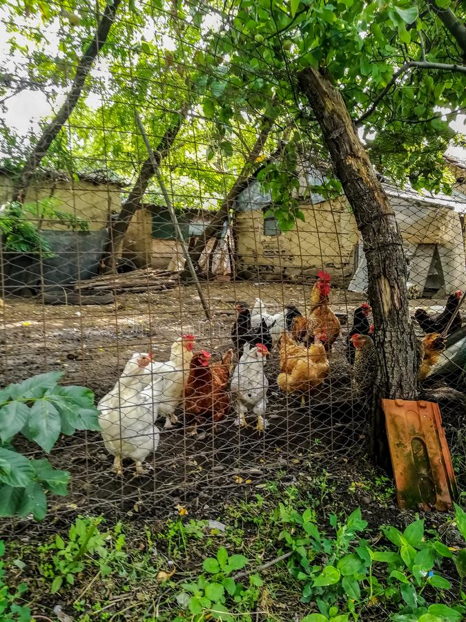 Rural hen house made with wire plates stock photos