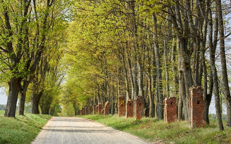 Rural highway, gravel country tree lined road with old blasted brick fence stock photos