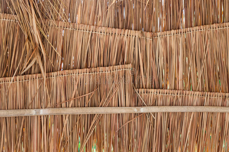 Rural house roof made of cogon grass,thatch roof background royalty free stock image