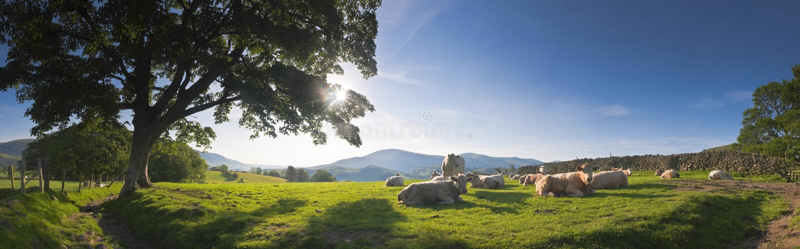 Rural idílico, distrito del lago, Reino Unido imagen de archivo