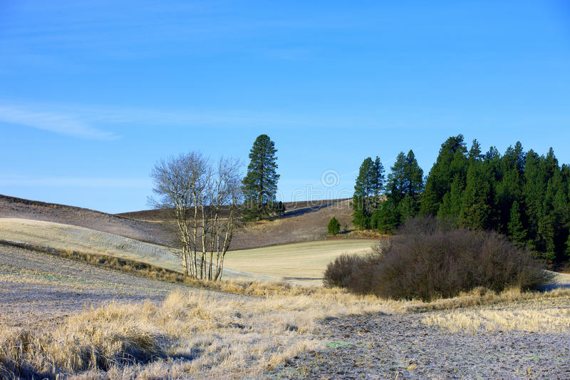 Rural Idaho palouse. Trees on a hillside in the Palouse region of north central Idaho royalty free stock photo