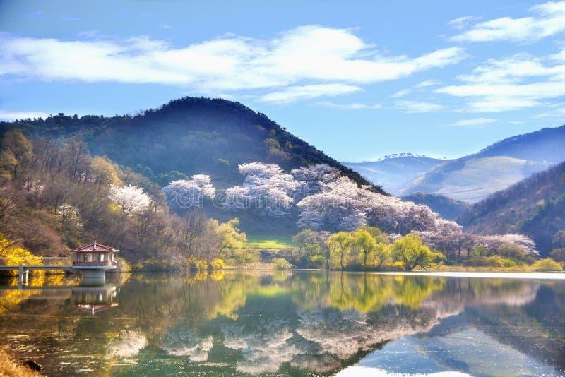 Rural lake in hillside, Korea royalty free stock photography