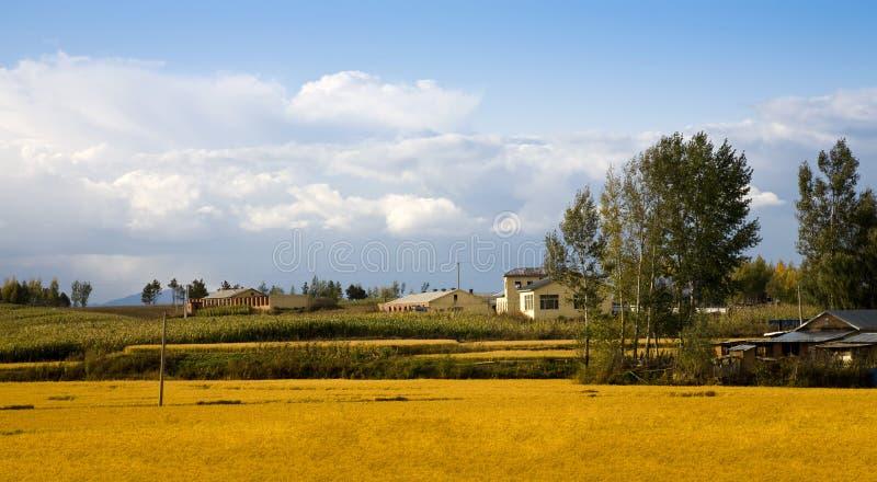 Download Rural landscape stock photo. Image of rural, farmland - 12822322