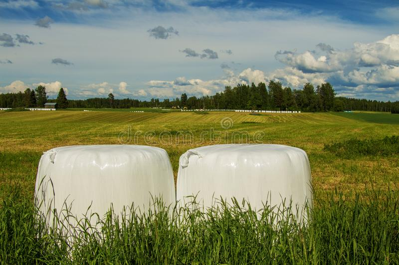 Rural landscape with beautiful fields and rolls of hay in white film royalty free stock images