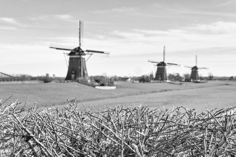Rural landscape, in black-and-white color - view of green meadow on background of the mills. On a sunny day, the Netherlands royalty free stock image