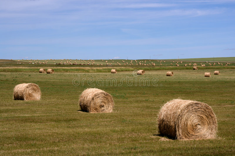 Rural landscape of Canada royalty free stock photos