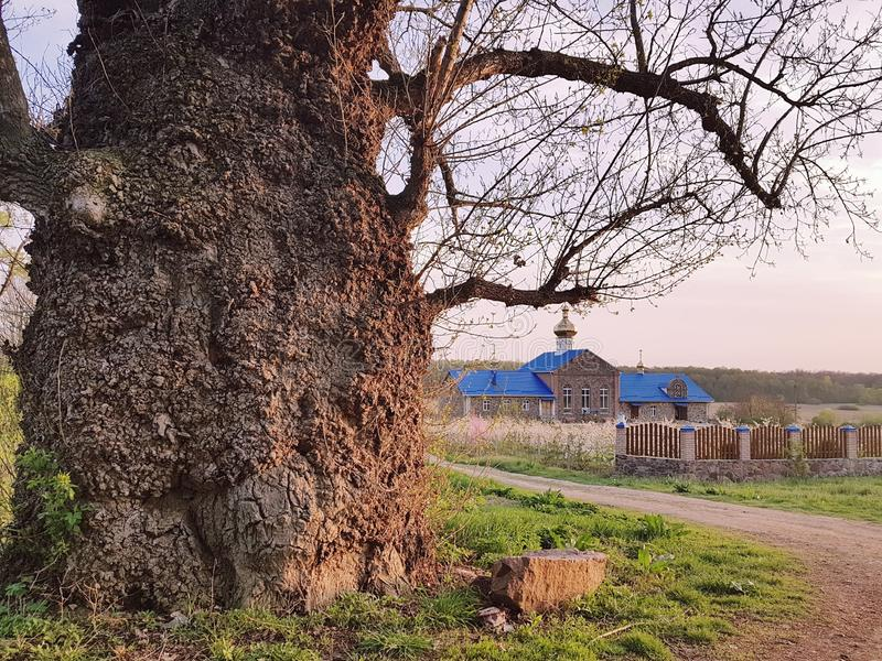 Rural landscape with church and very old tree with huge trunk stock photography