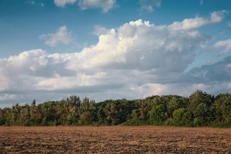 Rural landscape, cleaned field. Against the blue sky, in summer royalty free stock image