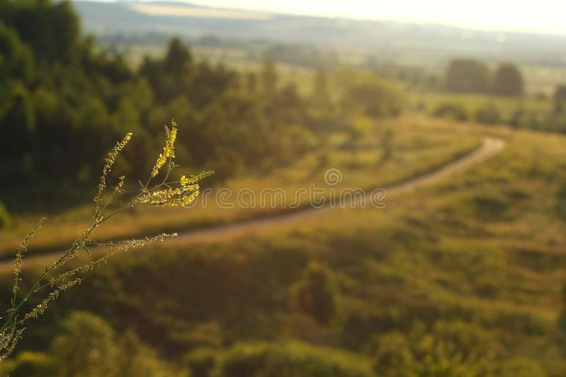 Rural landscape in evening light. Meadow herbs in evening light stock image