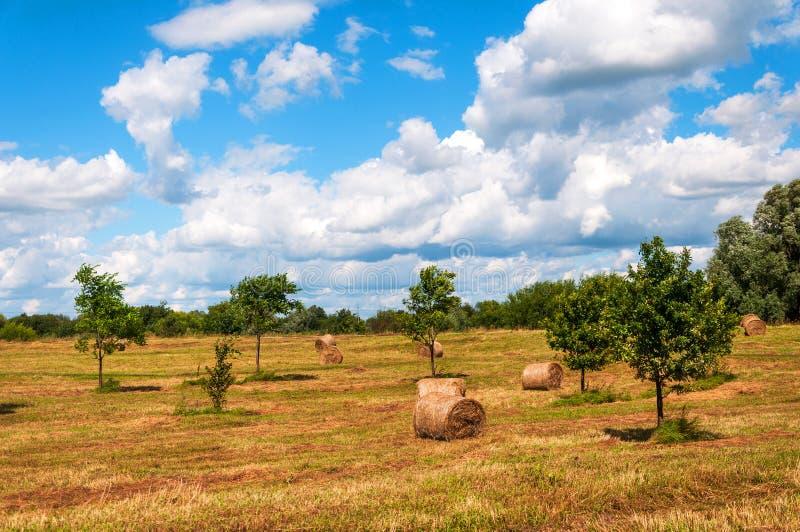 Rural landscape of field of haystacks under cloudy sky. Rural landscape of field full of haystacks under cloudy sky royalty free stock photography