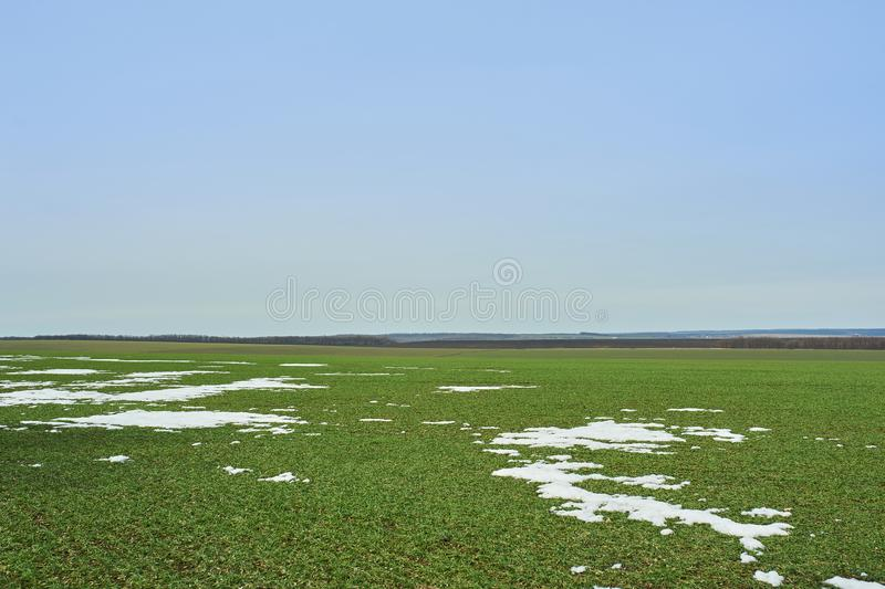 Rural landscape. Green field of winter wheat with snow lanes. Spring in Ukraine stock images