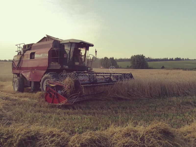 Rural landscape and harvester. Farmers harvest wheat. big red harvester in the field stock photos