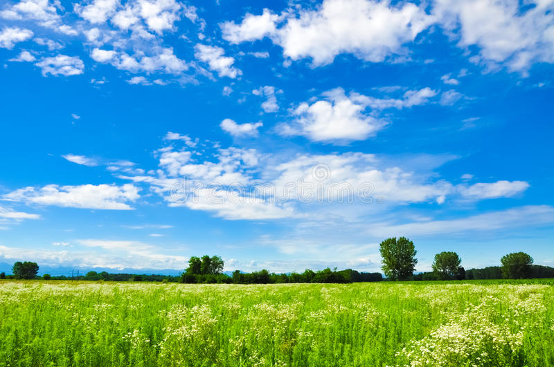 Rural landscape from Italy. A vivid image of a meadow in the blue sky stock image