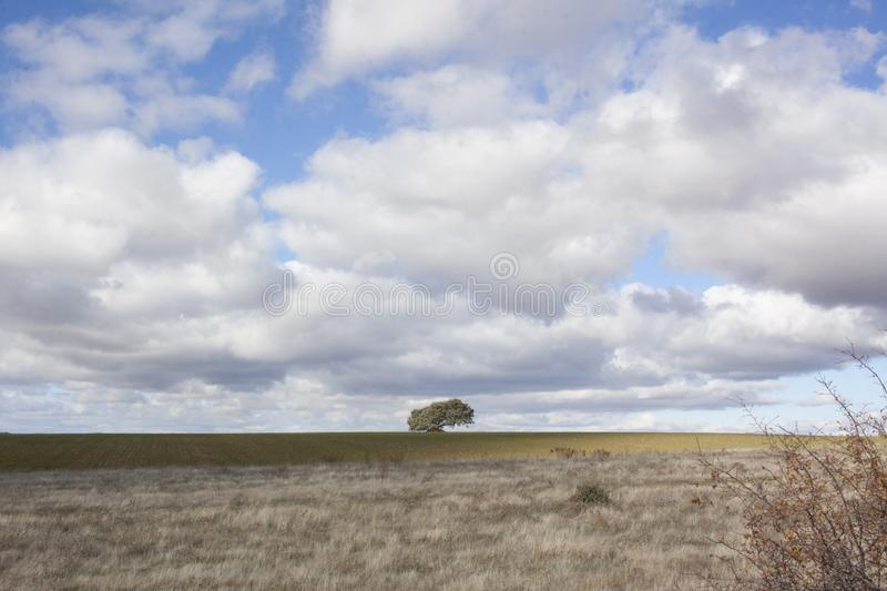 Rural landscape with a lonely tree in the background. Rural landscape with a sky full of clouds and a lonely tree on the horizon line stock photography