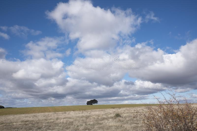 Rural landscape with a lonely tree in the background. Rural landscape with a sky full of clouds and a lonely tree on the horizon line stock image
