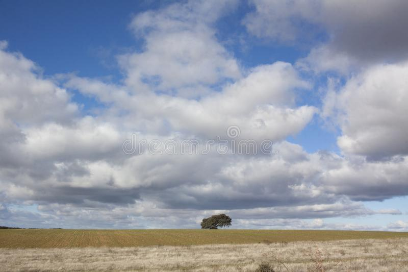 Rural landscape with a lonely tree in the background. Rural landscape with a sky full of clouds and a lonely tree on the horizon line royalty free stock photography