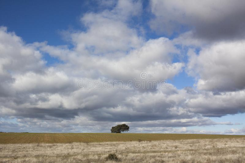 Rural landscape with a lonely tree in the background. Rural landscape with a sky full of clouds and a lonely tree on the horizon line royalty free stock images