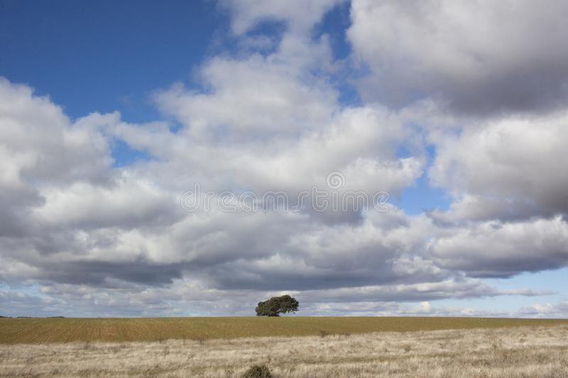Rural landscape with a lonely tree in the background. Rural landscape with a sky full of clouds and a lonely tree on the horizon line royalty free stock photo
