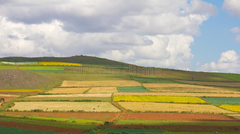 Rural landscape with multicolored patches of fields royalty free stock photography