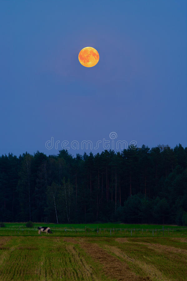 Rural landscape at night with red blood full moon rising over forest and meadow. stock photos