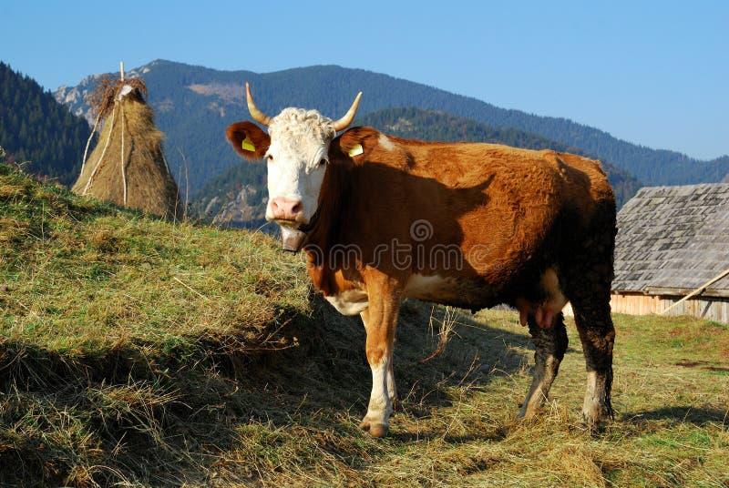 Rural landscape in Romania stock image