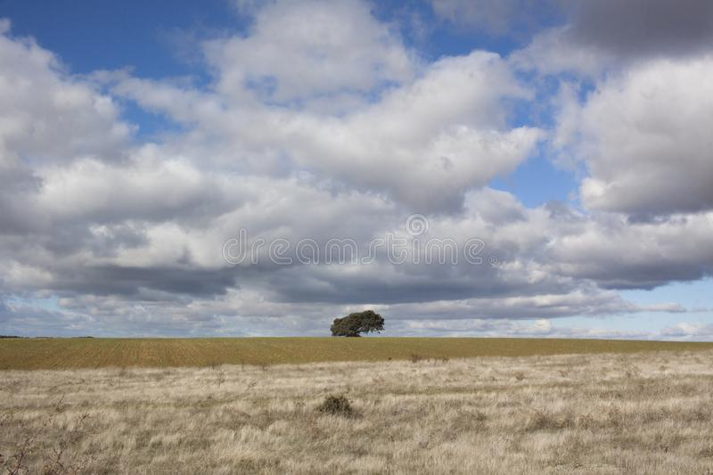 Rural landscape with a lonely tree in the background. Rural landscape with a sky full of clouds and a lonely tree on the horizon line stock photos