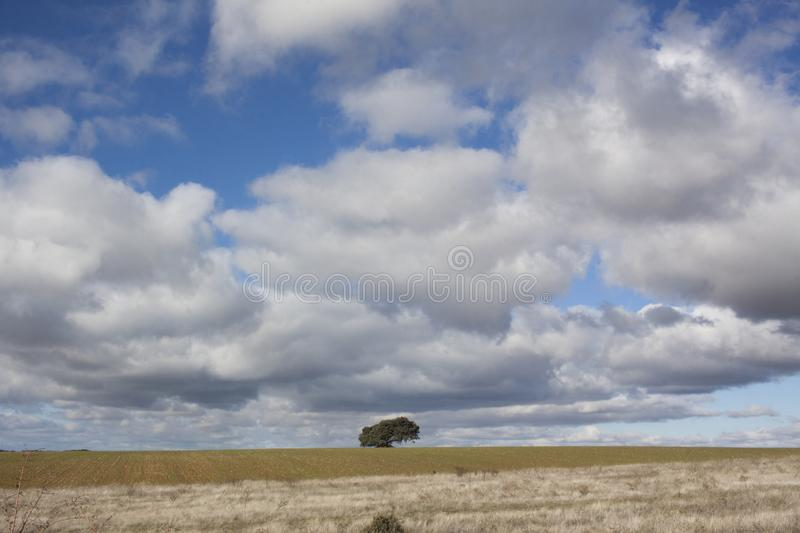Rural landscape with a lonely tree in the background. Rural landscape with a sky full of clouds and a lonely tree on the horizon line stock images