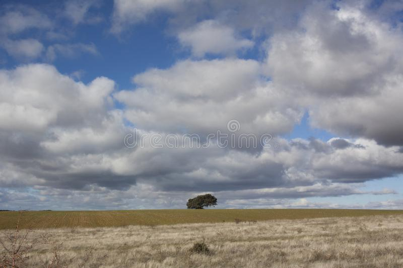 Rural landscape with a lonely tree in the background. Rural landscape with a sky full of clouds and a lonely tree on the horizon line stock photo