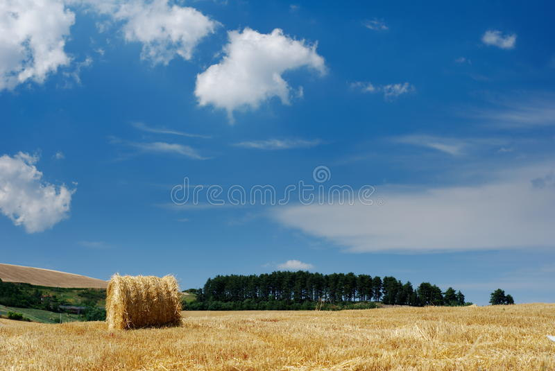 Rural landscape with straw bale. And line of dark pine trees in background (selective focus on straw bale royalty free stock photos