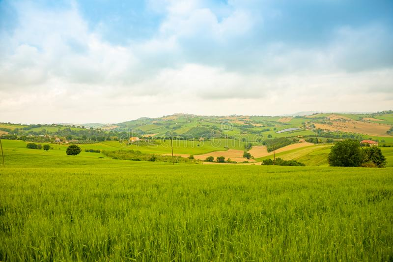 Rural Landscape at summer fields in Italian province of Ancona in Italy stock photo