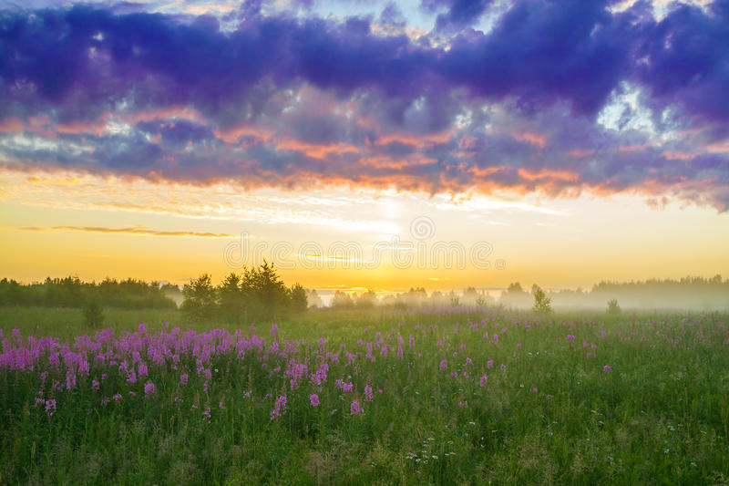 Rural landscape with the sunrise, a blossoming meadow and fog royalty free stock image