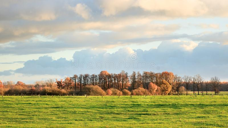 Rural landscape with trees in autumn colors, Turnhout, Belgium. Rustic rural landscape with a meadow and row of trees in autumn colors, Turnhout, Belgium stock images