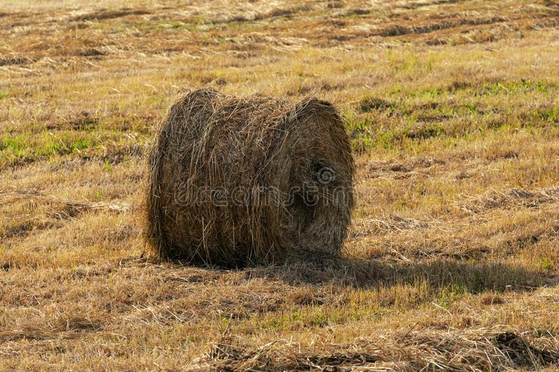 Rural landscape view of one yellow haystack rolls on mowed field on sunny weather. Rural landscape view of one yellow haystack rolls on mowed field on sunny day royalty free stock images
