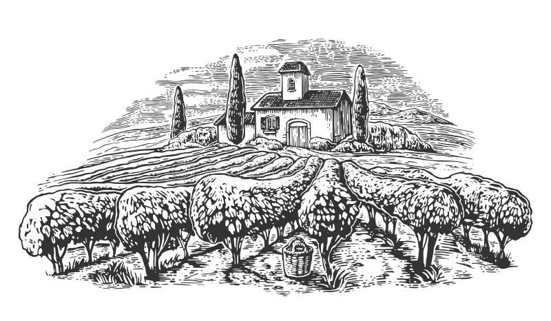 Rural landscape with villa, vineyard fields and hills. Black and white drawn vintage vector illustration for label, poster.  vector illustration