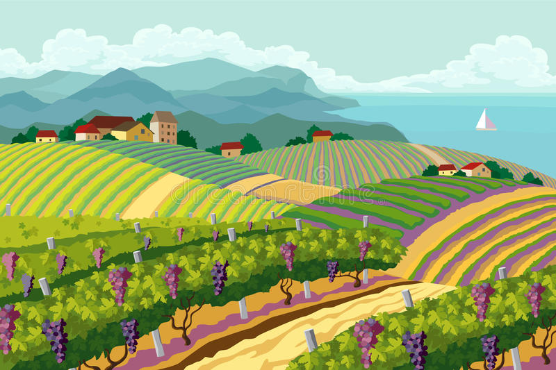 Rural landscape with vineyard. And mountain and sea panoram royalty free illustration