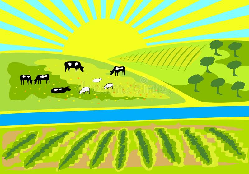 Rural landscape with vineyard, an olive grove and pasture with grazing cows and sheep. Rural sunrise landscape for farm, store or market. Milk, dairy, farm royalty free illustration