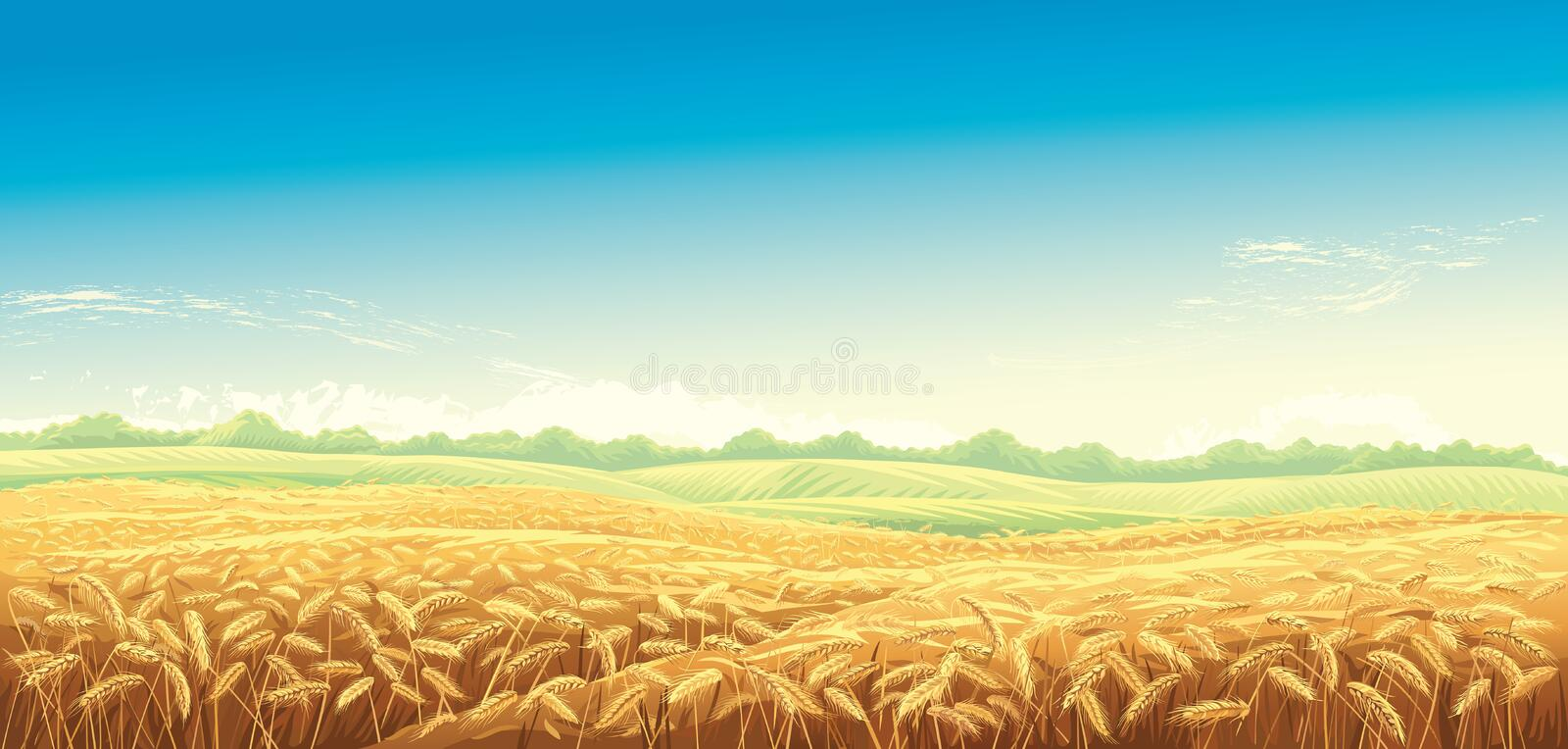 Rural landscape with wheat fields royalty free illustration