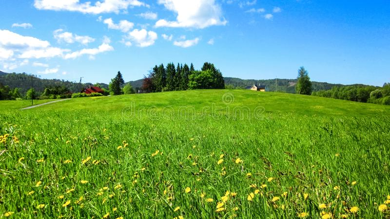 Rural Landscape with Wild Yellow Flowers in The Green Meadow royalty free stock images