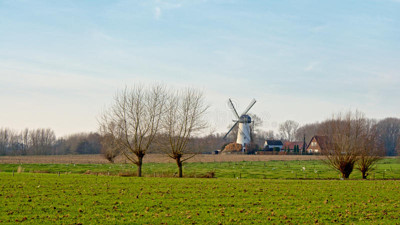 Rural landscape wth traditional windmill. Agricultural flemish landscape with white traditional windmill royalty free stock photos